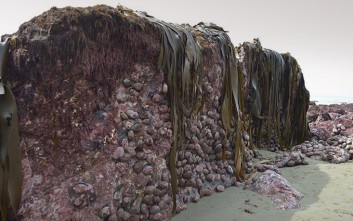 Δύο μέτρα σήκωσε τον πυθμένα της θάλασσας ο σεισμός στη Νέα Ζηλανδία