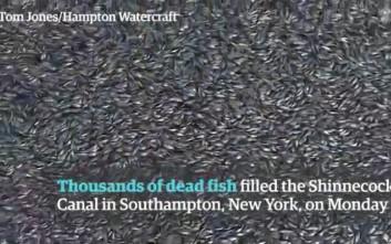 Τα χιλιάδες νεκρά ψάρια που κάλυψαν κανάλι της Νέας Υόρκης