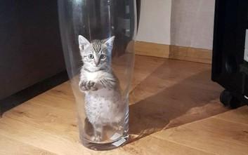 Η απόδειξη ότι το να έχεις γάτα έχει απρόβλεπτα αποτελέσματα