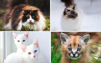 Όμορφες και... άσχημες γάτες που κοστίζουν μια περιουσία