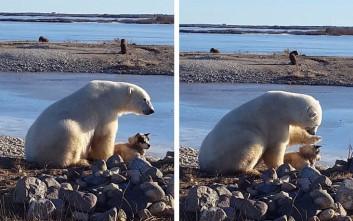 Το απροσδόκητο χάδι πολικής αρκούδας σε σκύλο