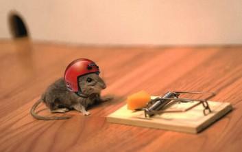 Πέντε απόπειρες της ανθρωπότητας να φτιάξει καλύτερες… ποντικοπαγίδες