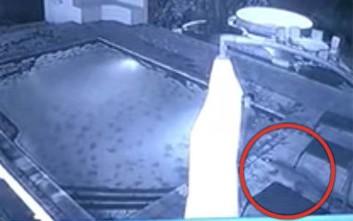 Κροκόδειλος επιτέθηκε σε ζευγάρι μέσα σε πισίνα ξενοδοχείου