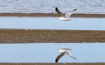 Φθινοπωρινά στιγμιότυπα από την παραλία Ψιλή Άμμος στη Χαλκίδα