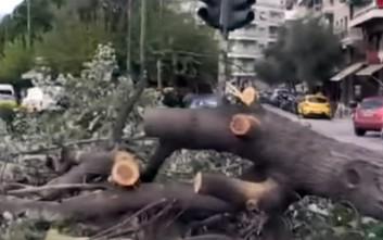 Ο αέρας έριξε δέντρο στην Ευελπίδων