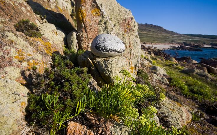 Κρίταμο, το βότανο-υπερτροφή της αρχαιότητας