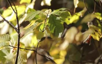 Βιονικό σπανάκι ανιχνεύει εκρηκτικά