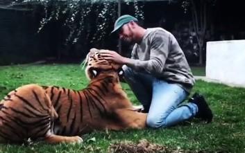 Ο Λούις Χάμιλτον και τα παιχνίδια του με μια τίγρη