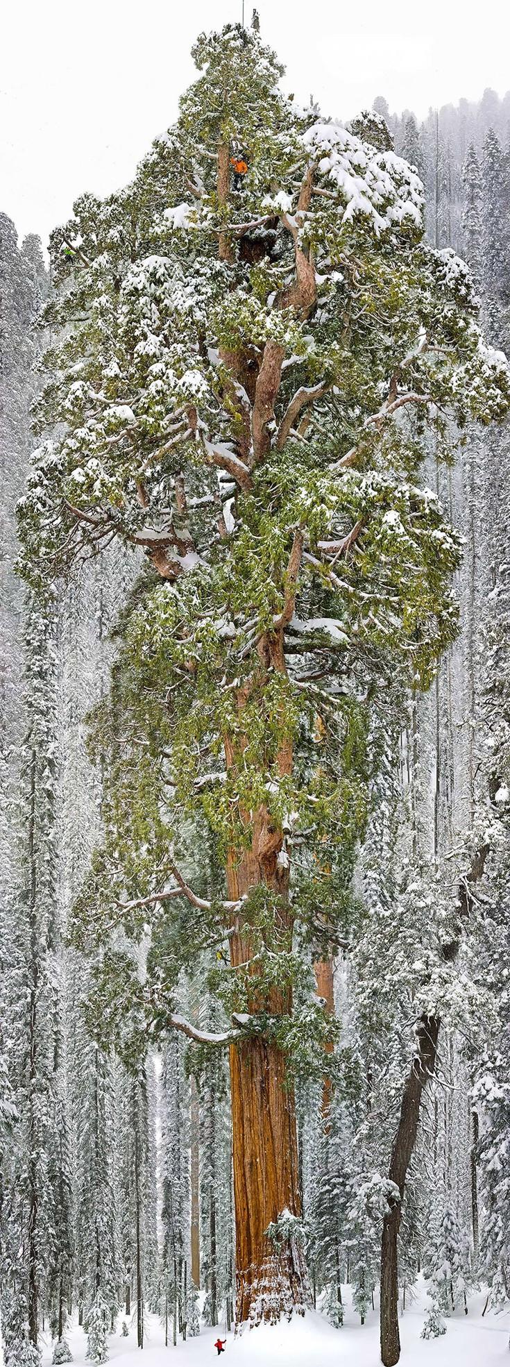 trees20