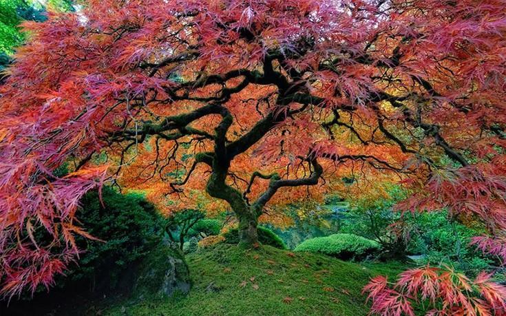 Τα 16 πιο όμορφα δέντρα του κόσμου