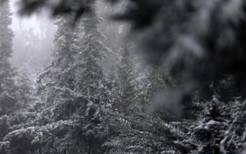 Πυκνές χιονοπτώσεις και χιονοθύελλες δοκιμάζουν τις αντοχές στον Έβρο