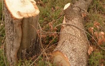 Δέντρο καταπλάκωσε άντρα στην Καλαμαριά