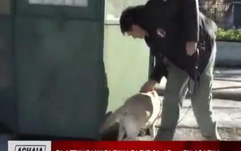 Οι... τετράποδοι συνεργάτες της Ελληνικής Αστυνομίας