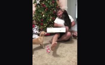Άνδρας ούρλιαξε από χαρά και του επιτέθηκε η γάτα του