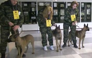 Τα κλωνοποιημένα σκυλιά που συνδράμουν αστυνομικούς στη Σιβηρία