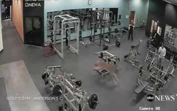 Η «έφοδος» ενός ελαφιού σε γυμναστήριο στη Νότια Καρολίνα