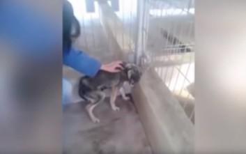 Έτσι αναρρώνει ένα σκυλί που έχει υποστεί κακοποίηση