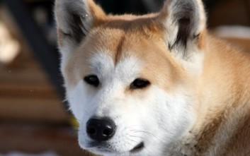 Η ιστορία του σκύλου που περίμενε το αφεντικό του μέχρι το τέλος της ζωή του