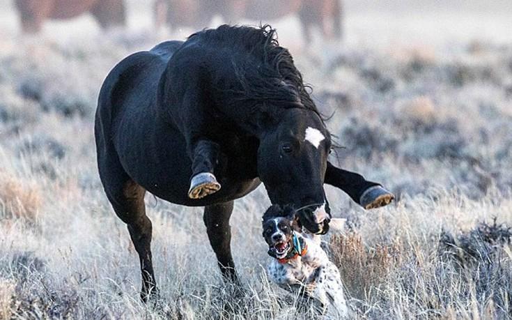 φύση μάχες ζώα