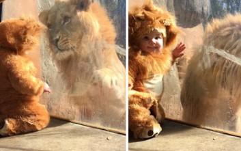 Ένα μωρό συναντάει τον βασιλιά των ζώων