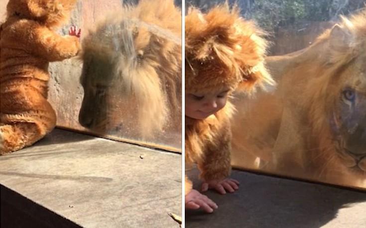 μωρό λιοντάρι ζωολογικός κήπος