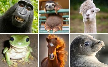 Ζώα με φωτογένεια «παίζουν» με το φακό
