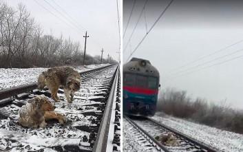 Τρένο περνά πάνω από σκυλί που έχει ακινητοποιηθεί τραυματισμένο στις ράγες
