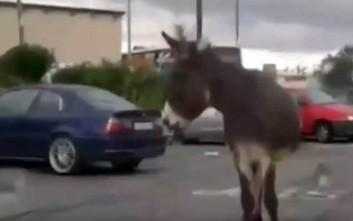 Δύο άλογα και ένας γάιδαρος κόβουν βόλτες στον κόμβο της Σούδας