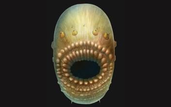 Ο αρχαιότερος πρόγονος του ανθρώπου που το στόμα του ήταν και πρωκτός του