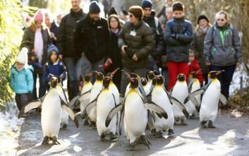 Ξεπάγιασαν ακόμα και οι… πιγκουίνοι στον Καναδά