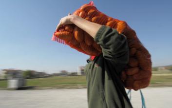 Περουβιανοί επιστήμονες καλλιέργησαν «αρειανές» πατάτες