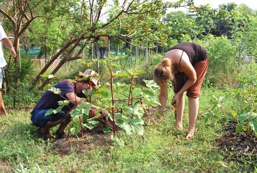 Buddha-garden-group-2