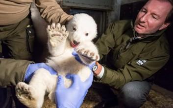 Ιατρικές εξετάσεις για το αξιολάτρευτο πολικό αρκουδάκι του Βερολίνου