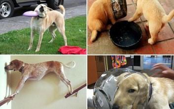 Τα απίστευτα κατορθώματα σκυλιών