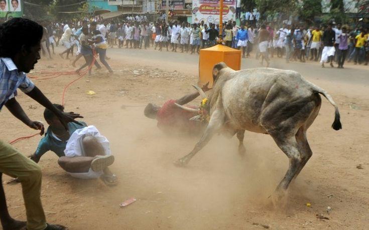 Δύο νεκροί σε φεστιβάλ ροντέο με ταύρους στην Ινδία