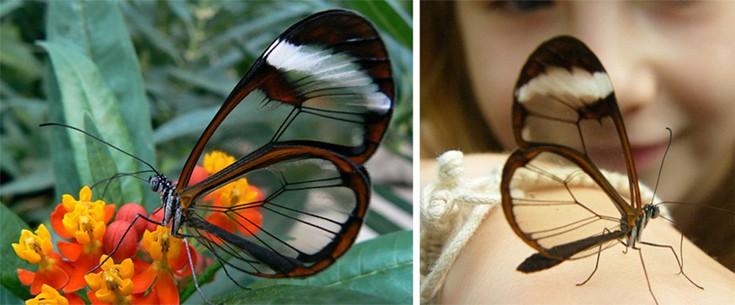 Τα διαφανή ζώα που δε φαντάζεσαι ότι υπάρχουν