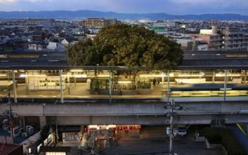 Ένα δέντρο 700 ετών βρίσκεται μέσα σε σιδηροδρομικό σταθμό για έναν ξεχωριστό λόγο