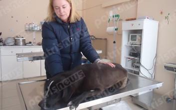 Ο Δήμος Πηνειού δείχνει το ενδιαφέρον του για τα αδέσποτα σκυλιά
