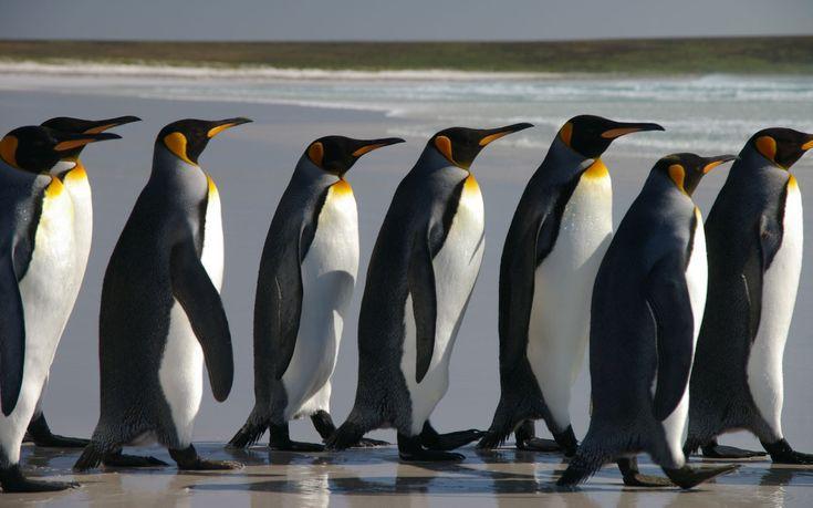 Τα «έξυπνα» αυτοκίνητα γίνονται ασφαλέστερα με τη βοήθεια… πιγκουίνων