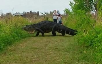 Αλιγάτορας «δεινόσαυρος» καταγράφηκε στη Φλόριντα