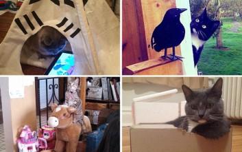 Γάτες, αυτά τα υπέροχα πλάσματα