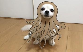 Οι πιο αστείες αυτοσχέδιες στολές για τον σκύλο
