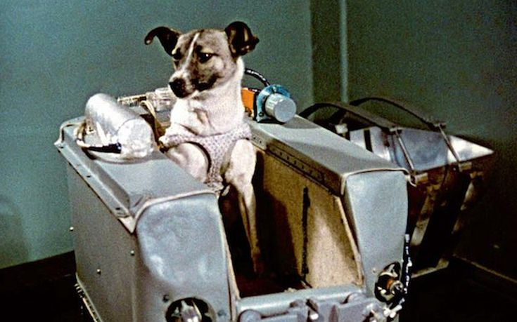 Η αλήθεια για το αδέσποτο σκυλί που από τους δρόμους της Μόσχας βρέθηκε σε τροχιά γύρω από τη Γη