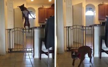 Η μεγάλη απόδραση του σκύλου