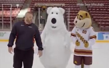 Η πολική αρκούδα που δεν αντέχει τον πάγο