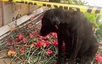 Σκύλος περιμένει το αφεντικό του που σκοτώθηκε στη Σμύρνη