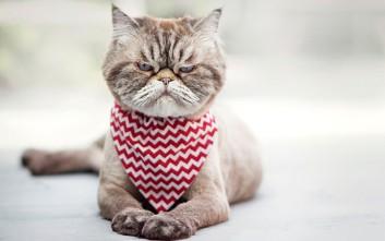 Τσαντισμένες γάτες που καλύτερα να μην πλησιάσεις