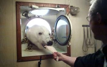 Η απρόσμενη «επίσκεψη» της πολικής αρκούδας