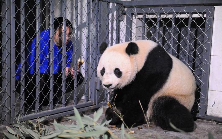 Η Μπά Μπάο «μετακόμισε» σην Κίνα
