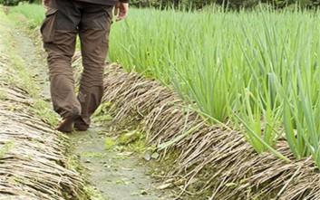 Τροπολογία για να μην χάνουν το επίδομα ανεργίας όσοι εργάζονται περιστασιακά σε αγροτικές δουλειές